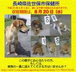 nagasaki_sasebo080804.jpg