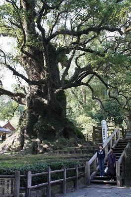 日本一のクスの木