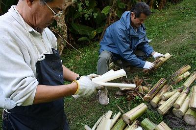 芭蕉の採取2
