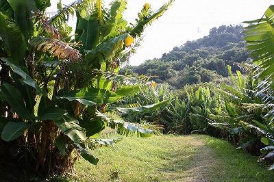 海岸へ続く芭蕉並木