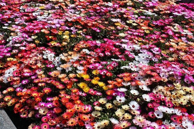 花かごしま2011