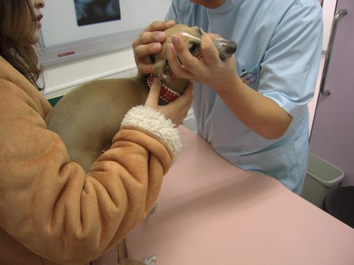 ワクチン接種4