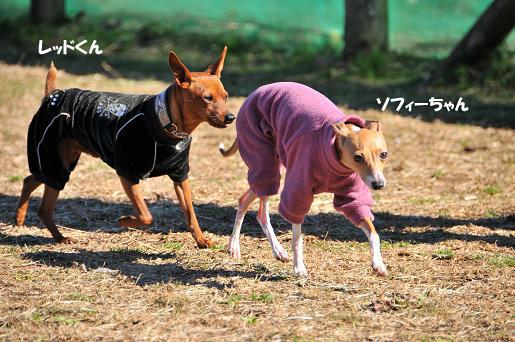 ドッグラン松戸0902011