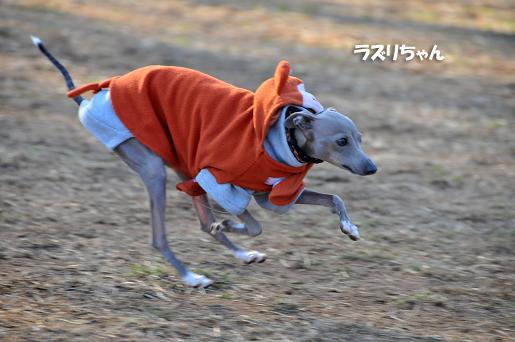 ドッグラン松戸09020110