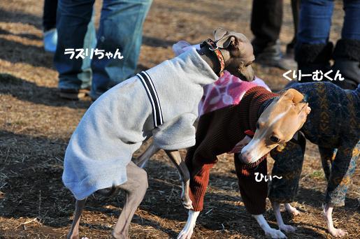ドッグラン松戸09020115