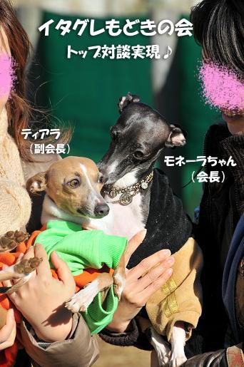 ドッグラン松戸09020117