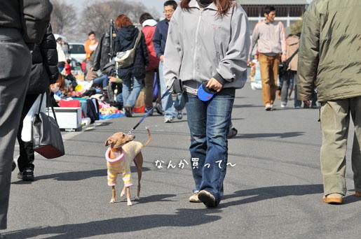 日曜日の散歩 (7)
