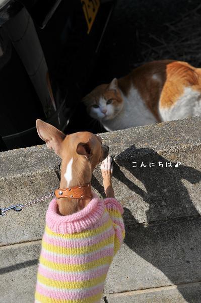 日曜日の散歩 (9)