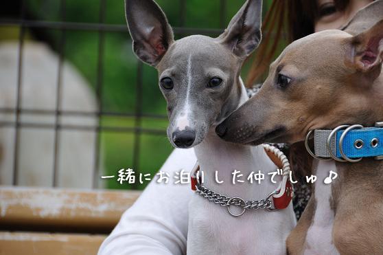 城南島お誕生会 (7)