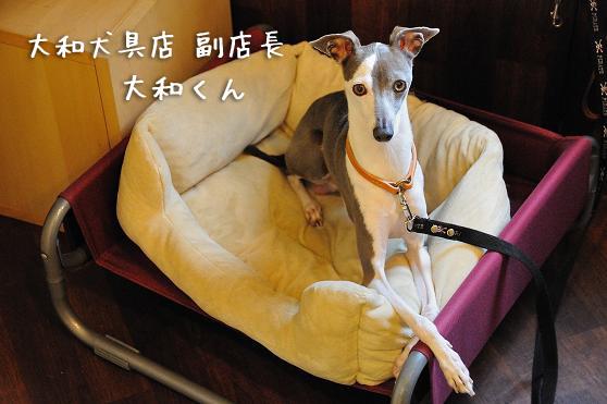 大和さんの首輪 (3)