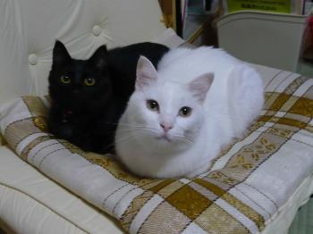 こんな猫もいます