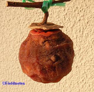 干して16日目の柿(干し柿)