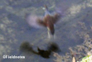 とぶ謎の鳥