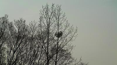 ひとりぼっちのヤドリギ