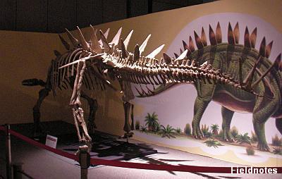 トウジャンゴサウルスの化石標本(大恐竜帝国)
