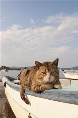 田代島・仁斗田漁港、船の上でくつろぐ