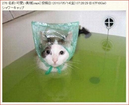 Shower Cap with Cat