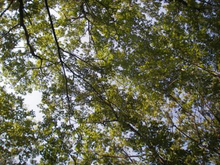 木漏れ日圧縮