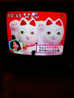 日本テレビ ラジかるッ