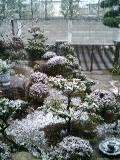 20090121雪景色