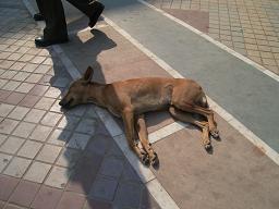 ネループレイス犬