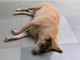 犬の生活3