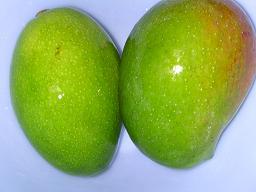 青いマンゴー