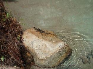 Tanjung Rhu6