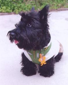 犬の写真1