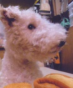 犬の写真3