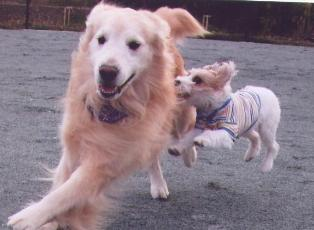 犬の写真b