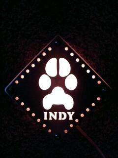 INDY-03.jpg