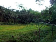 道中は熱帯雨林がほとんど、あとはたまに海がみえるー