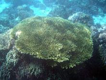 浅場は光が当たって珊瑚のカラーがよく分かるね