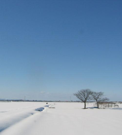 2009129c.jpg