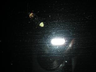 窓ガラスの蛍