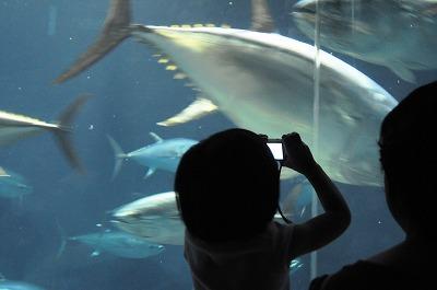 20080921葛西水族館-2 033-1