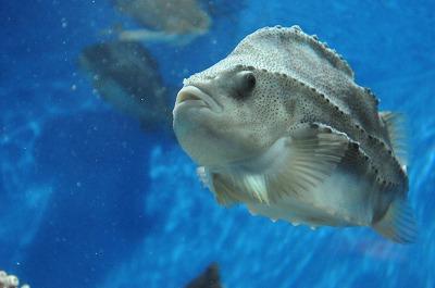 20080921葛西水族館 248-1
