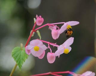 20081004庭の花 008-1ブログ