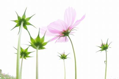 20081004庭の花 134-1