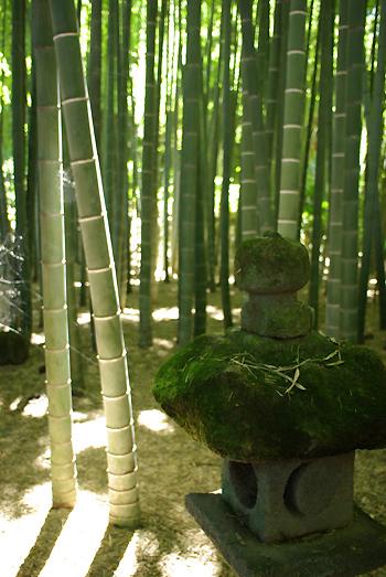 PENTAX K10D  鎌倉