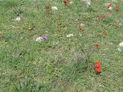 2006-springpoppi.jpg