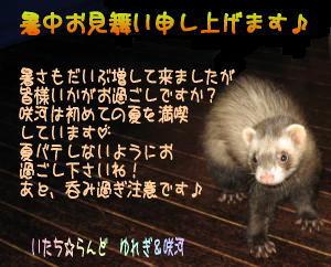 sakuga02.jpg