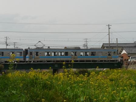 菜の花と電車 (7000系) 1