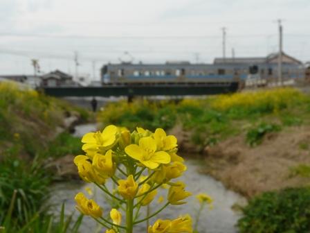菜の花と電車 (7000系) 2