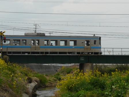 菜の花と電車 (7000系) 3