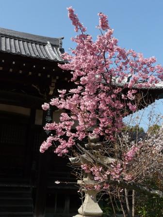 淨福寺 1
