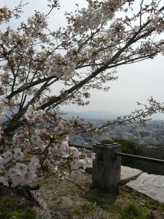 ハコダテニオイ桜 5