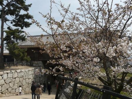 ハコダテニオイ桜 6