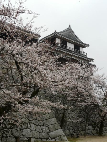 ソメイヨシノ&北隅櫓